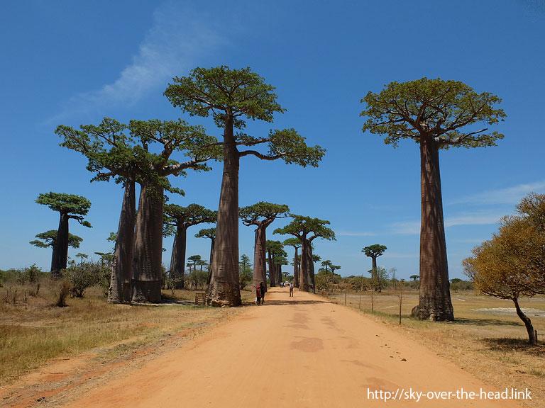 バオバブ街道(マダガスカル)/Baobab Road(Madagascar)