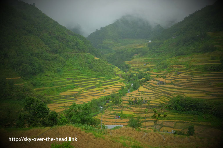 バナウェ西のライステラス(フィリピン)/ West Banaue rice terrace (Philippines)