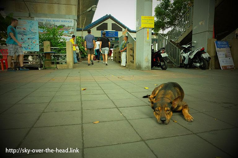 Central(Taksin) Pier近くの犬