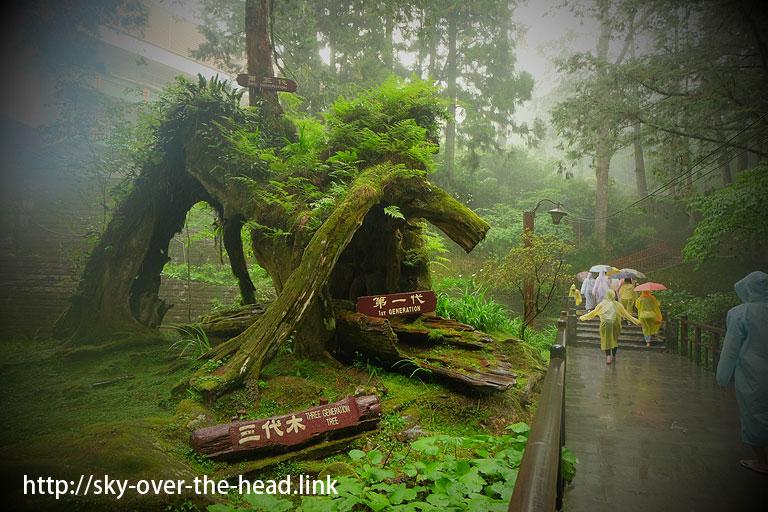 阿里山散策<巨木遊歩道編>