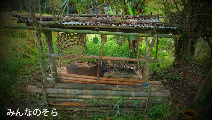 ジャティルイのライステラス(Jatiluwih Rice Terrace)で、世界遺産の棚田をお散歩(バリ島)