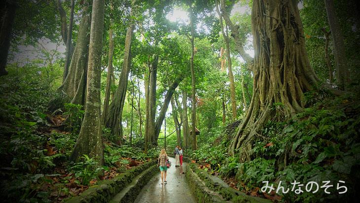 そこは、本格的な「森」でした@バリ島ウブドの観光地!モンキーフォレストで「猿+α」を愛でる