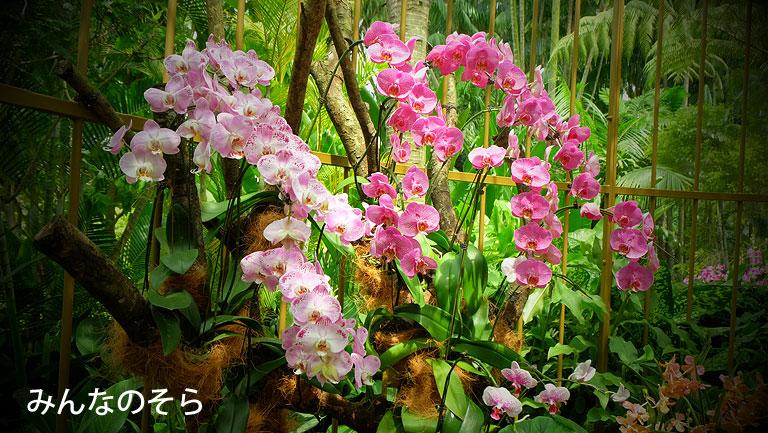 【世界遺産】シンガポール植物園(Singapore Botanic Gardens)