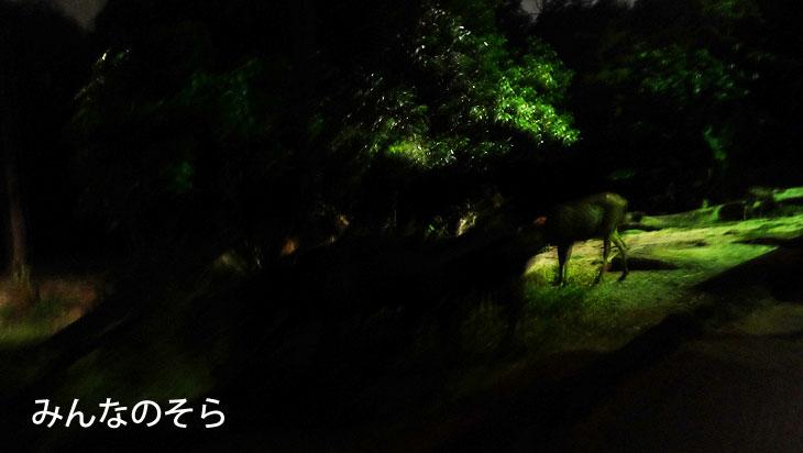写真は上手にとれず。でも「マレーの虎」を見れて大満足