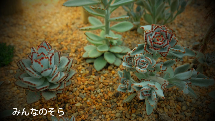 フラワードームは、地中海沿岸と半砂漠の気候帯を再現