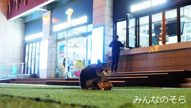 釜山タワーは、展望台だけじゃない!写真撮影スポットが満載